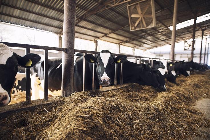 Запрет импорта кормовых добавок из Германии